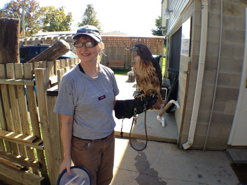 A Raptor Rehab volunteer prepares to feed a resident raptor