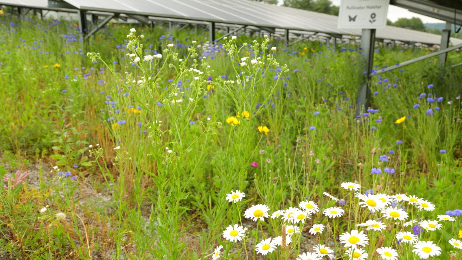 E.W Brown pollinator habitat