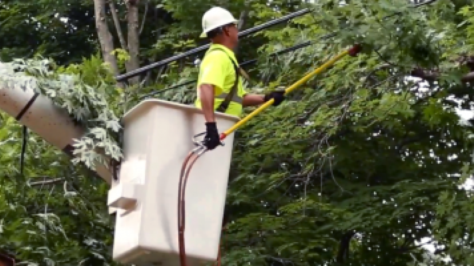 man in bucket truck removing limbs from a tree near power lines