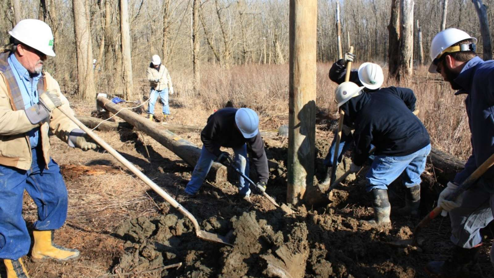 employees installing a pole in the forest for the Indiana bat habitat