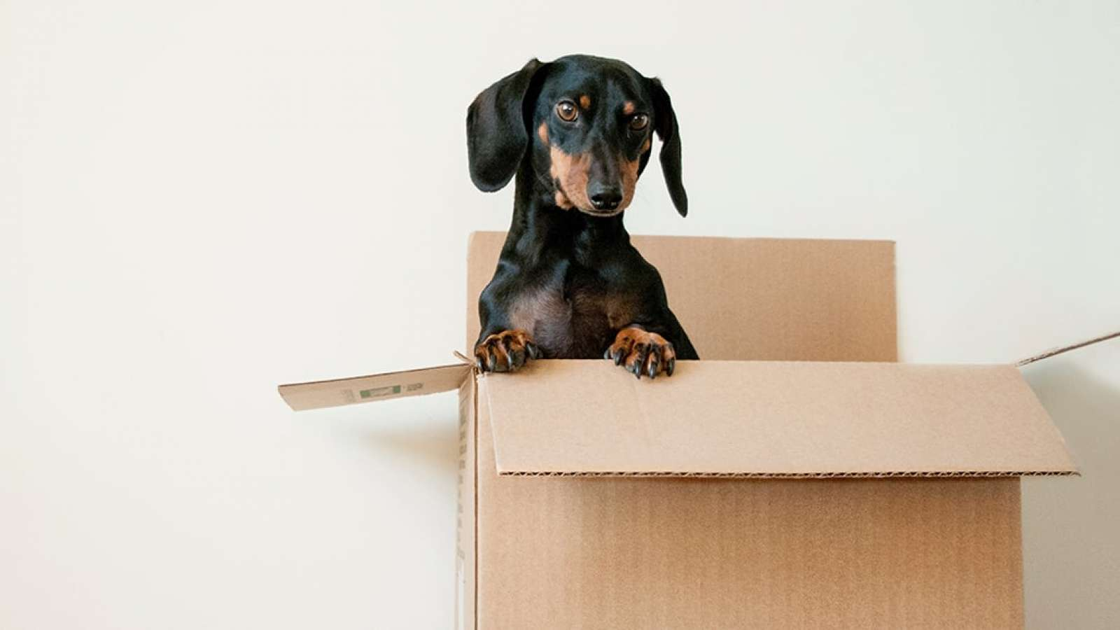 Dog in a cardboard box