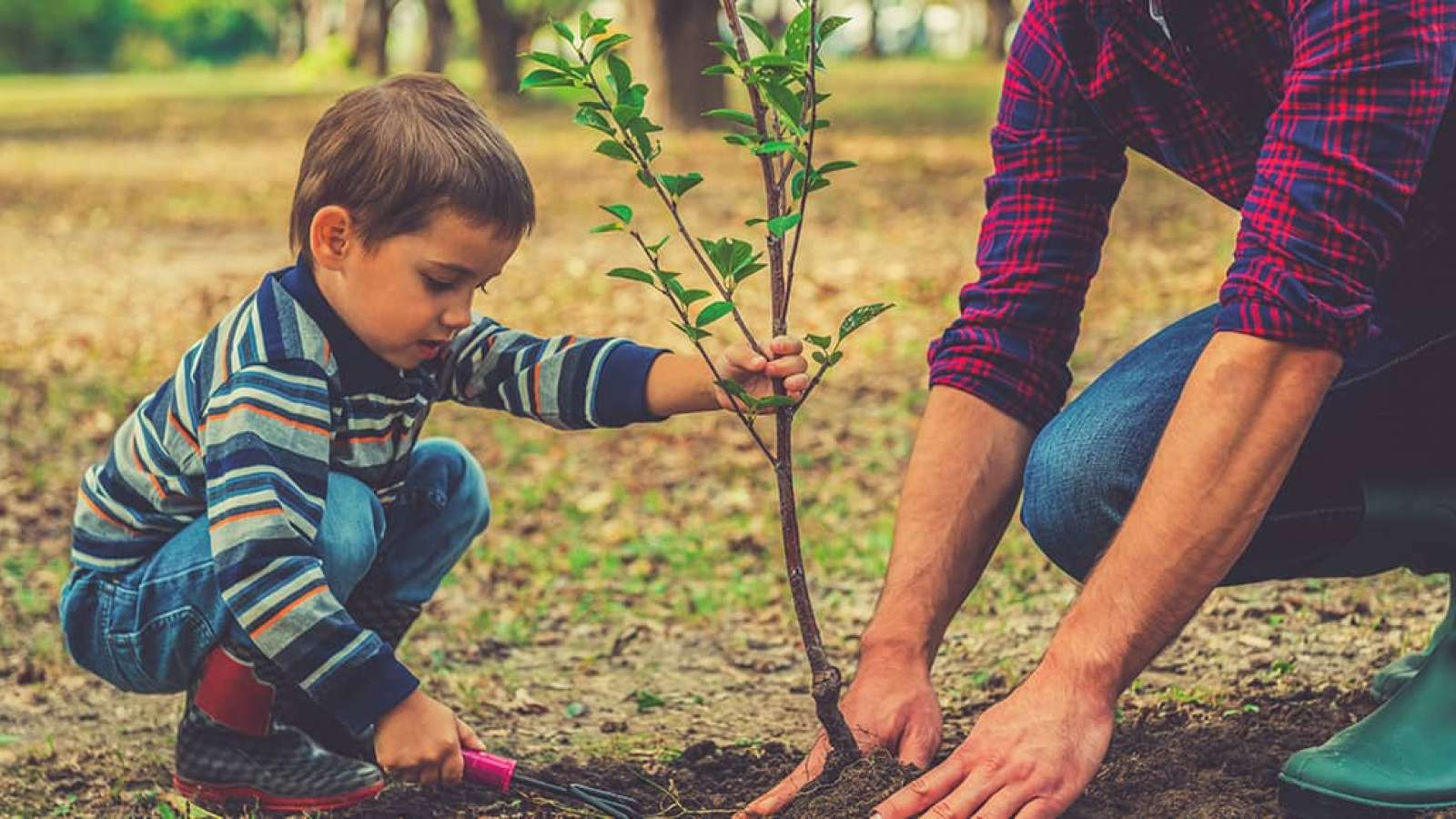 Man and boy planting a seedling