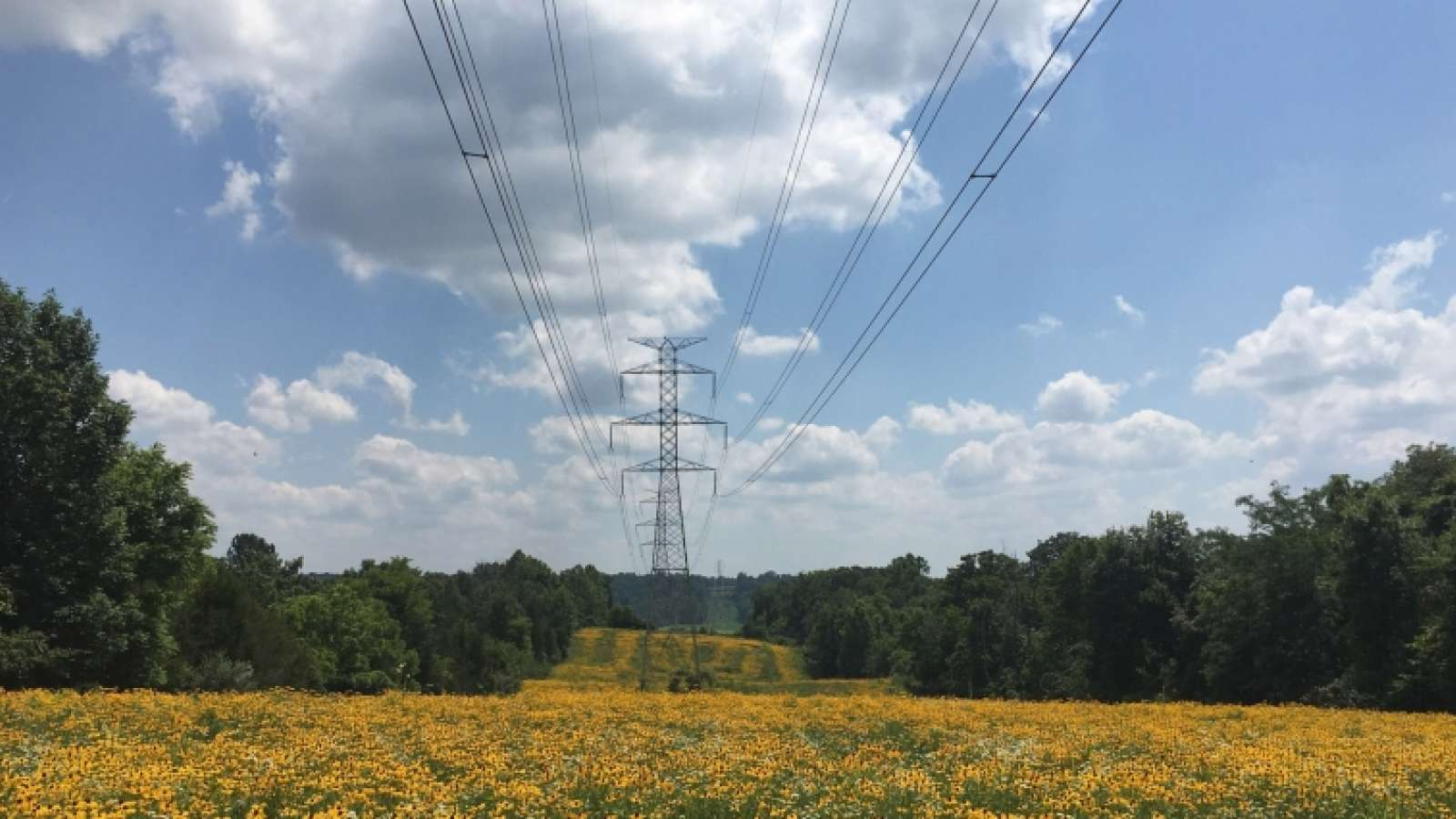 transmission tower and power lines in a right of way with trees on each side