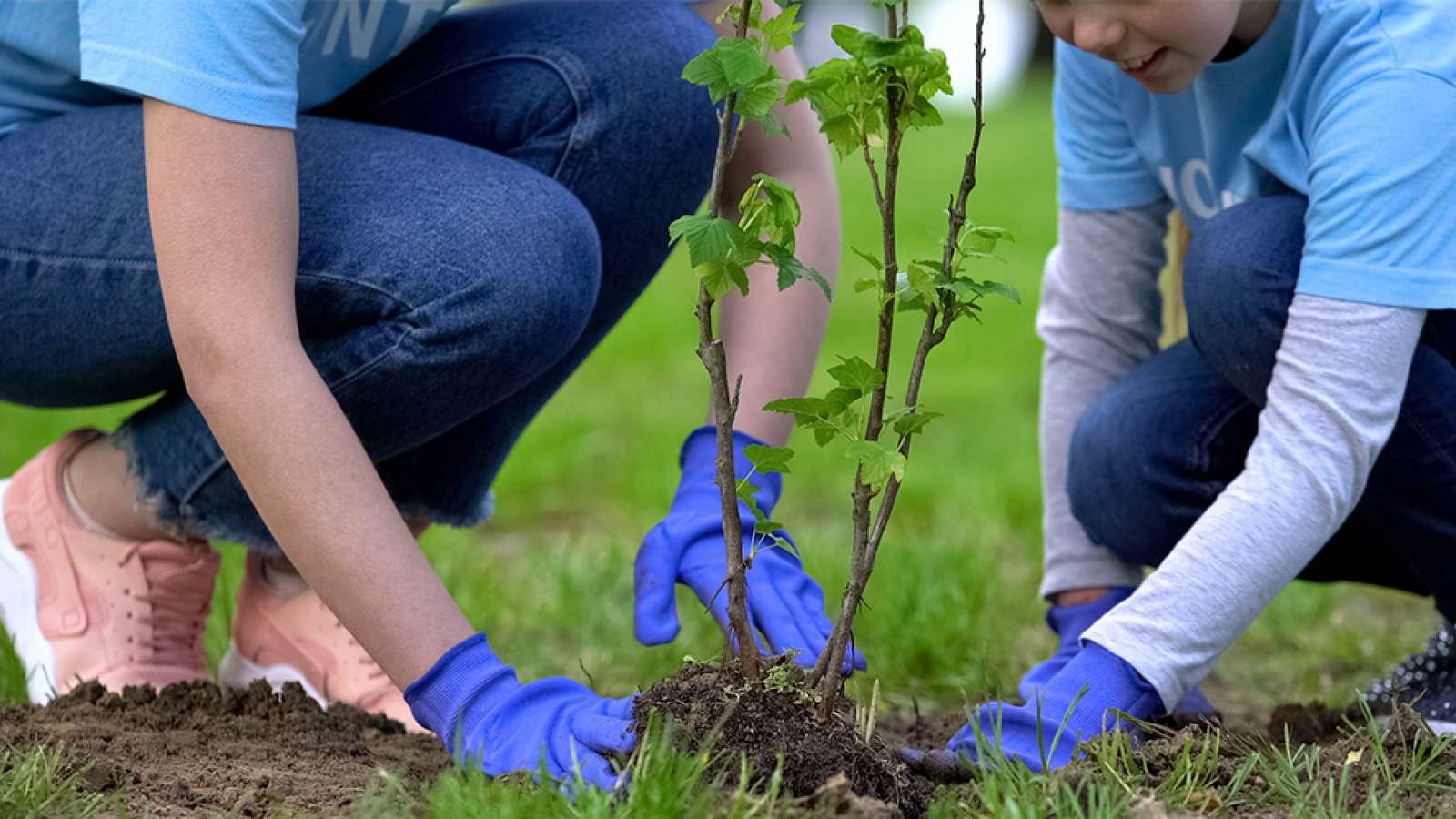 People planting trees