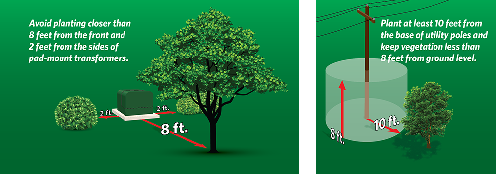 graphic showing distance to plant from pad transformers and utility poles