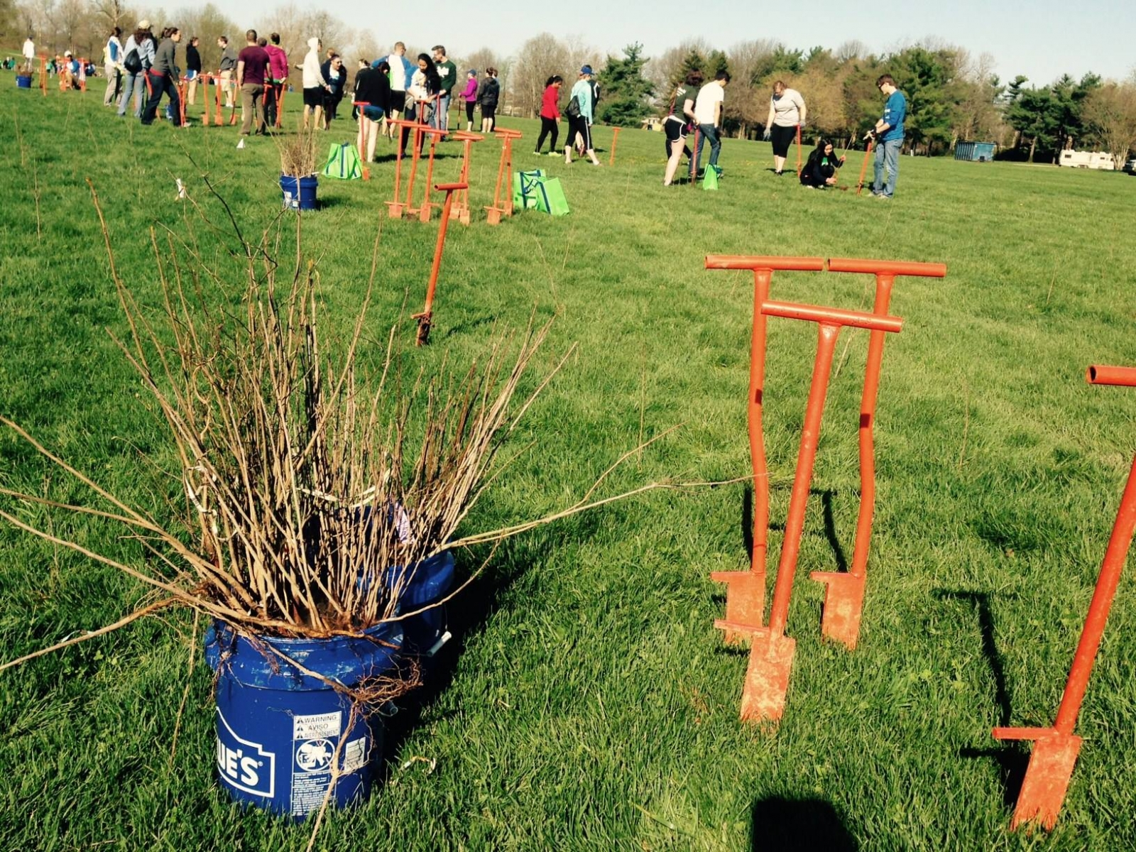 volunteers planting trees at a Reforest The Bluegrass event